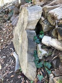Old firewood for mulch or composting