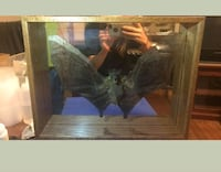 Real bat in glass case