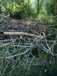 Tons of sticks and branches if anyone needs any to burn / projects
