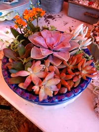 5x10 inches. Succulent plants in a