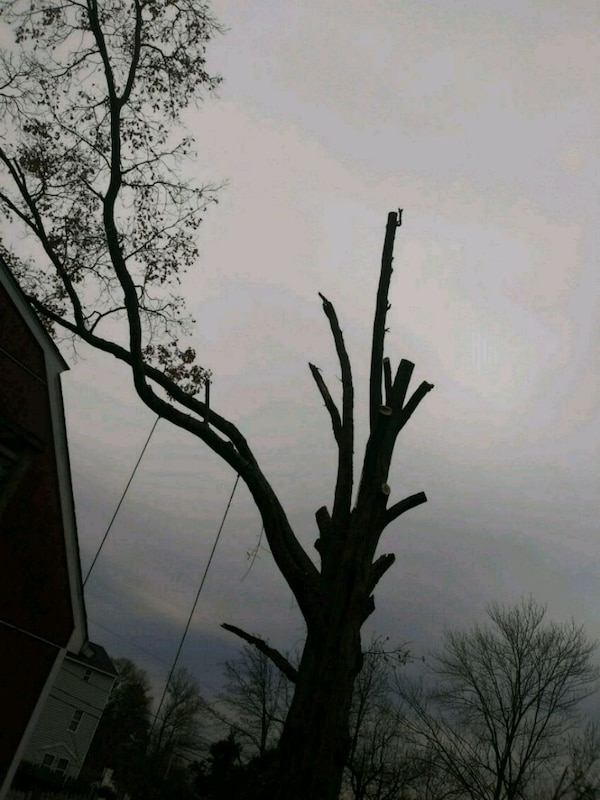 Diego lansdcaping tree service removal
