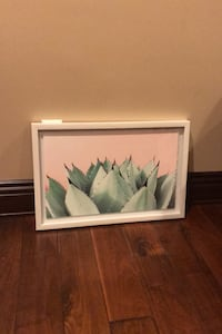 Framed Succulent Photo