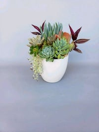 Succulents #A4 Lake Forest, 92610