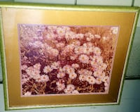 photo of white petaled flowers with brown frame