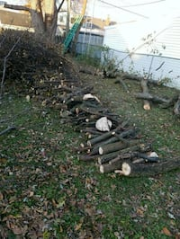 Free tree wood. Just trimmed today. Parma, 44134