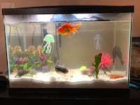 35 gallon tank with heater and filter Vancouver, 98683