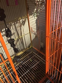 Pet or chicken or large birds cage  Enid, 73703