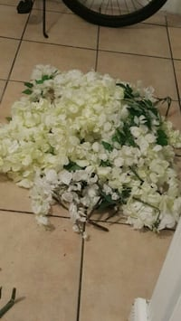 white and green petaled flowers Paramount, 90723