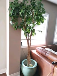 7ft synthetic tree plant Oakville, L6H