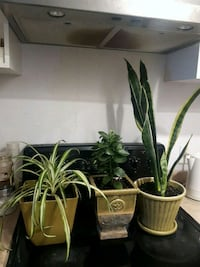 3 assorted plants with the pots