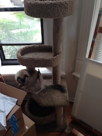 brown and white cat tree Denver, 80205