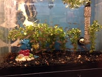 20 Gallon Fish Tank - Fish not included JACKSONVILLE