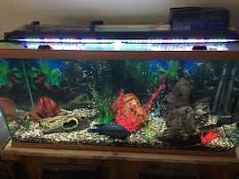 90 Gallon fish tank with hand made stand