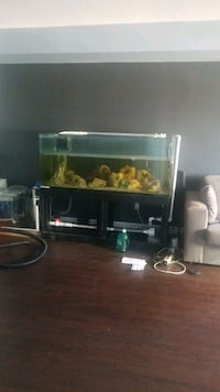 110 gallon tank and stand for sale  Toronto, M1H 3G6