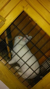 Rabbit with rabbit cage housing Coral Springs, 33065