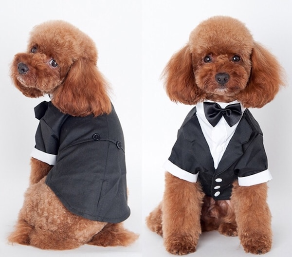 Brand new dog suit size M