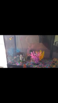 Fish tank with ornaments, filter, light and fish food Oakville, L6M 3V4