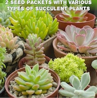 Sow and grow your own cactus garden {Brand New} 205 mi