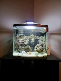 29 gallon bio cube with stand(Salt water & rocks) included