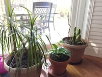 Two green leaf plant in brown clay pots Toronto, M3B 1W2