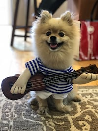 Guitar Dog Costume / Funny Pet Clothes for Halloween Outfit Toronto, M5V 3H2