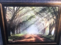 Beautiful picture of sunlight through trees Plantation, 33324