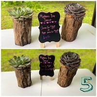 Large Succulent's in driftwood