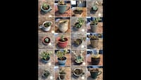healthy succulents and propagations! Zoom to see better! Prices: $2-30 Layton, 84041