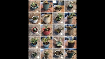 healthy succulents and propagations! Zoom to see better! Prices: $2-30