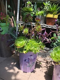 Beautiful succulent arrangement, price for each  Los Angeles, 91605