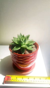 Succulent in ceramic planter New Westminster, V3M 1A6