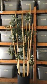 Bamboo decoration 7'8'and9' tall Henderson, 89015