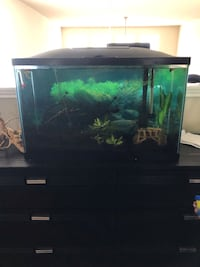 29 gallon fish tank Austin, 78748