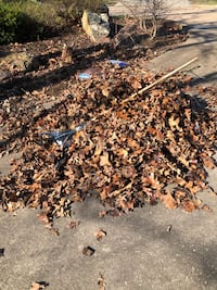 Free leaves for compost