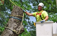 Tree Removal and Prunning