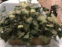 2 artificial greenery in brass container Bel Air, 21014