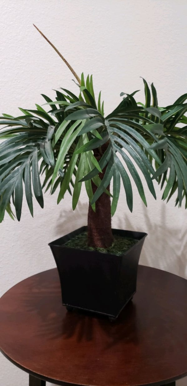 "Palm Tree Artificial/ Fake With Vase 15"" H f243baae-fa99-48be-9a0f-1775653dd4d2"