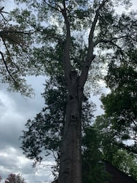 Tree cutting North Chesterfield