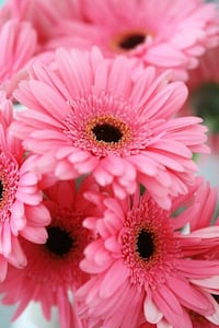 pink and white flower decor Bloomington, 92316