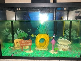 Fish tank with everything!