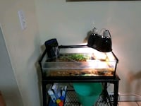 Red eared slider with tank