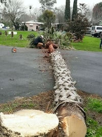 PALM TREE REMOVAL SAME DAY SERVICE
