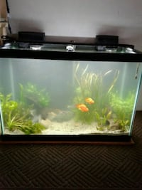 black framed clear glass fish tank Citrus Heights, 95621