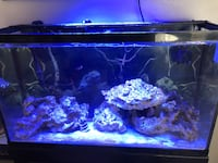 38 gallon tank and stand  Palm Springs, 33461