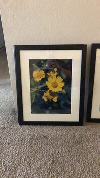 yellow and red petaled flowers painting Albuquerque, 87114