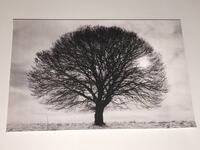 21 x 17 Grey Wooden Frame Matted to 8 x 10 - Tree Silhouette Jersey City, 07304