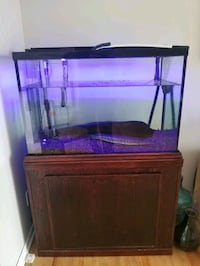 60 gallon fully equipped aquarium  for300$  ...set up is  worth 1500$ Châteauguay, J6K 3T2