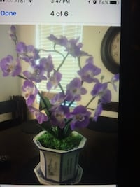 OBO-beautiful new electric purple orchid potted plant Riverbank