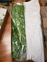 Israeli Ruscus - 200+ stems! Post-wedding special! Silver Spring, 20910
