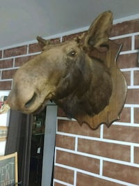 TAXIDERMIE Longueuil, J4H 2Y4